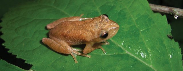 a-frog